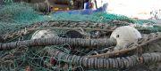 3 tony wyciągniętych zagubionych sieci rybackich na wybrzeżu