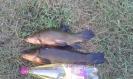 moje rybki