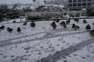 Kaczki Zimą