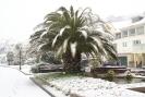 Palma w śniegu.