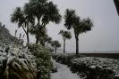 Palmy w śniegu.